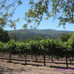 A Little Wine TastinginNapa and Sonoma