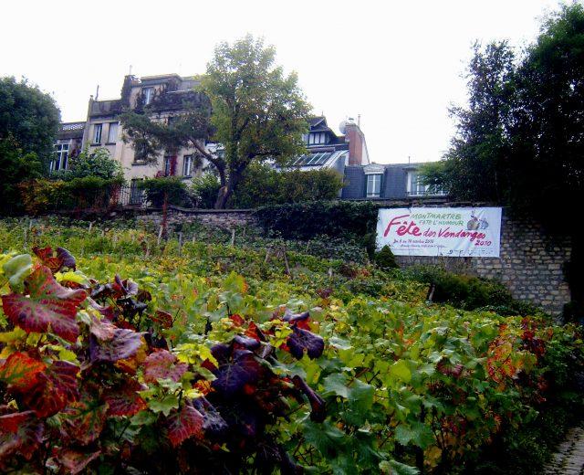 Vineyards of Montmartre -- Photo courtesy of M. Schuermann