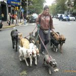Watching the Dog Walkers in Buenos Aires