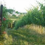 The Poetry of Santarcangelo di Romagna