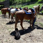 Saddle Up! Horseback Riding in Montana