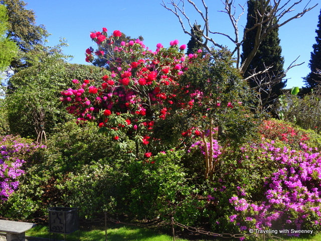 Lake Maggiore Gardens - Bursts of colorful blossoms on the trees of Isola Bella