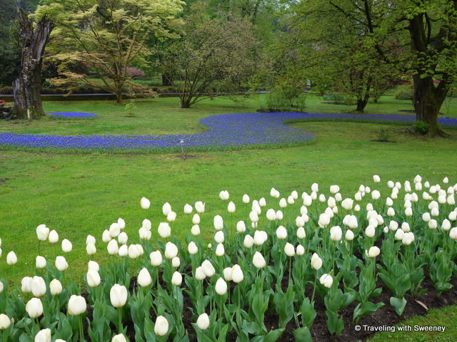 Lake Maggiore Gardens - A pathway of blue flowers and white tulips at Villa Taranto
