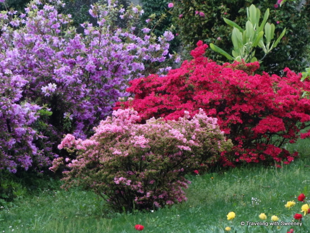 Lake Maggiore Gardens - Beautiful displays of complementary colors among the blooms at Villa Taranto