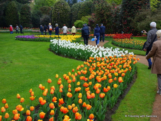 Lake Maggiore Gardens -- Walkway through the tulips at Villa Taranto