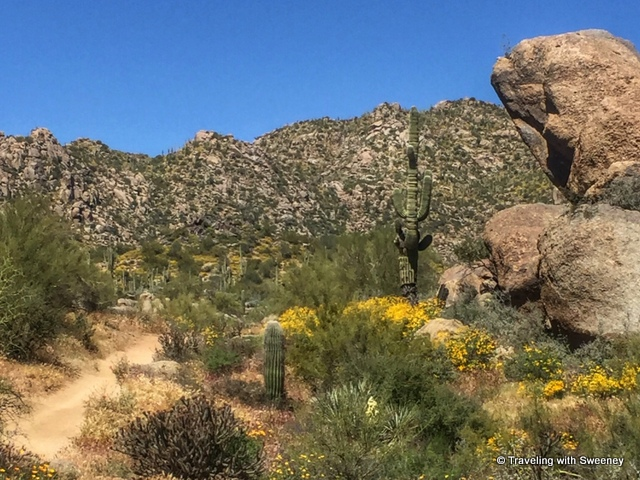 Our Top 5 Scottsdale Hikes … So Far