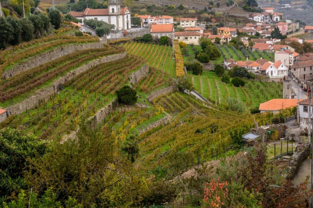 Terraced vineyards of the Douro Valley -- Photo by Barbara Nelson