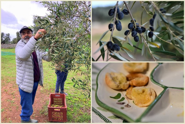 Corrado Rodio of Antica Masseria Brancati; olives and olive oil tasting -- photos on the right by Federica Donadi