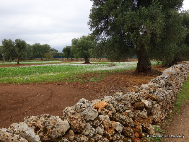 Olive groves of Parco Naturale Regionale Dune Costiere