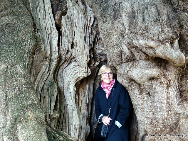 Standing inside an ancient olive tree at Antica Masseria Brancati, Puglia, Italy