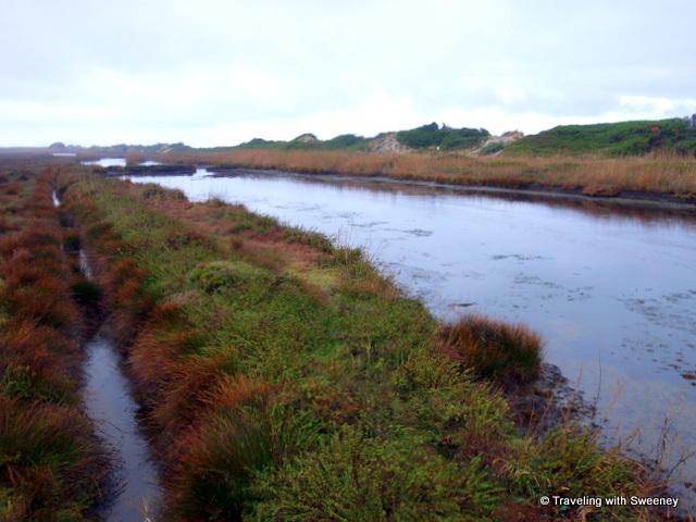 The wetlands of Dune Costiere
