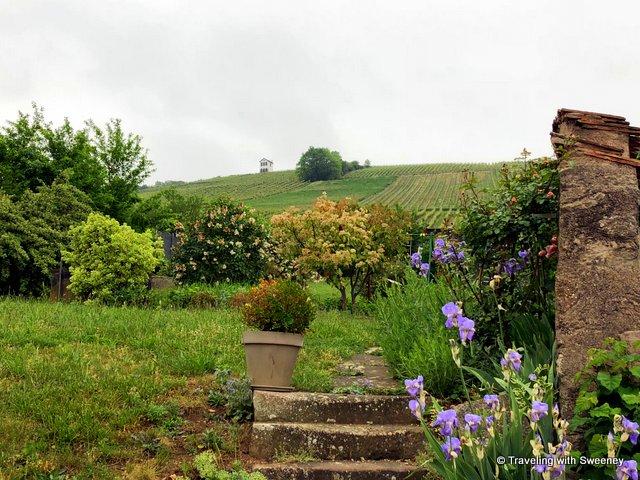 The hillside vineyards of Kirchberg de Barr seen from Domaine Hering in Barr, Alsace, France
