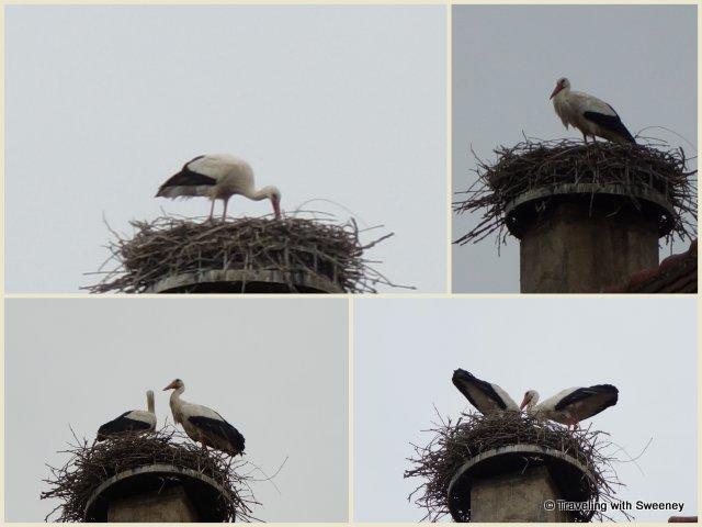Storks nesting on a chimney top in Obernai, Alsace, France