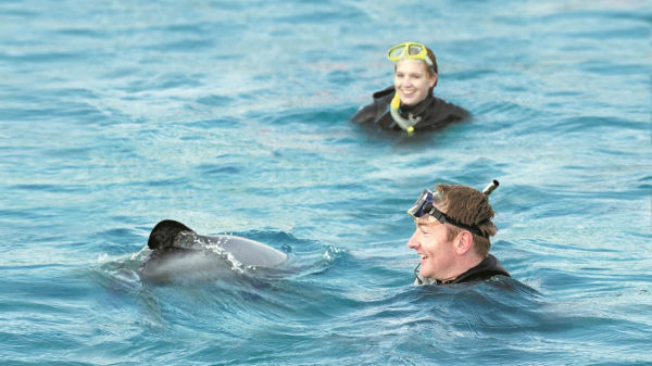 Swimming with the dolphins in Akaroa, New Zealand