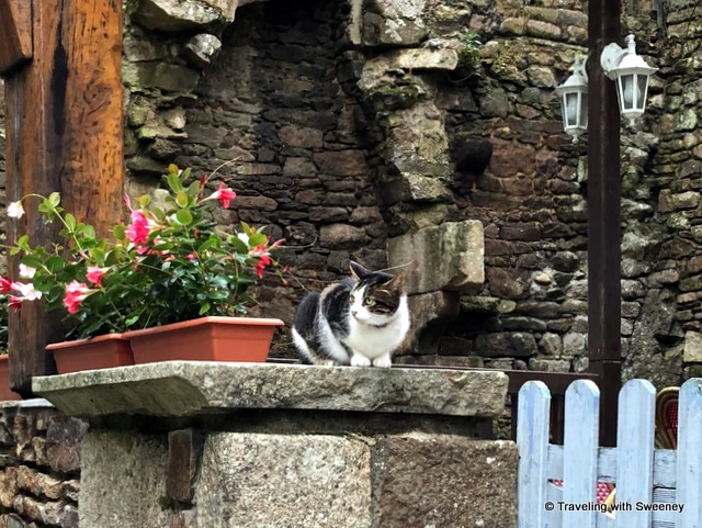 A black and white cat watches passersby on Rue du Petit Fort in Dinan, France