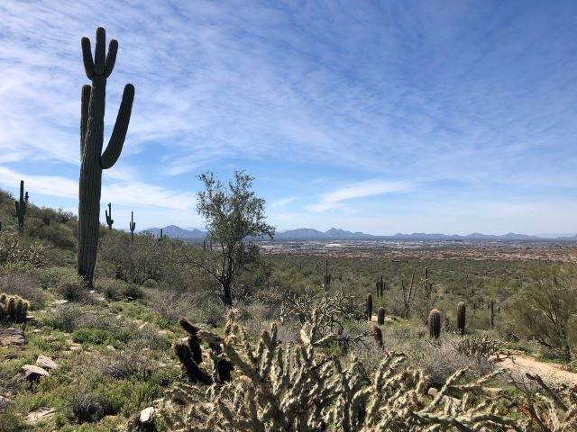 Beautiful Sonoran Desert scene in the McDowell Sonoran Preserve in Scottsdale, Arizona