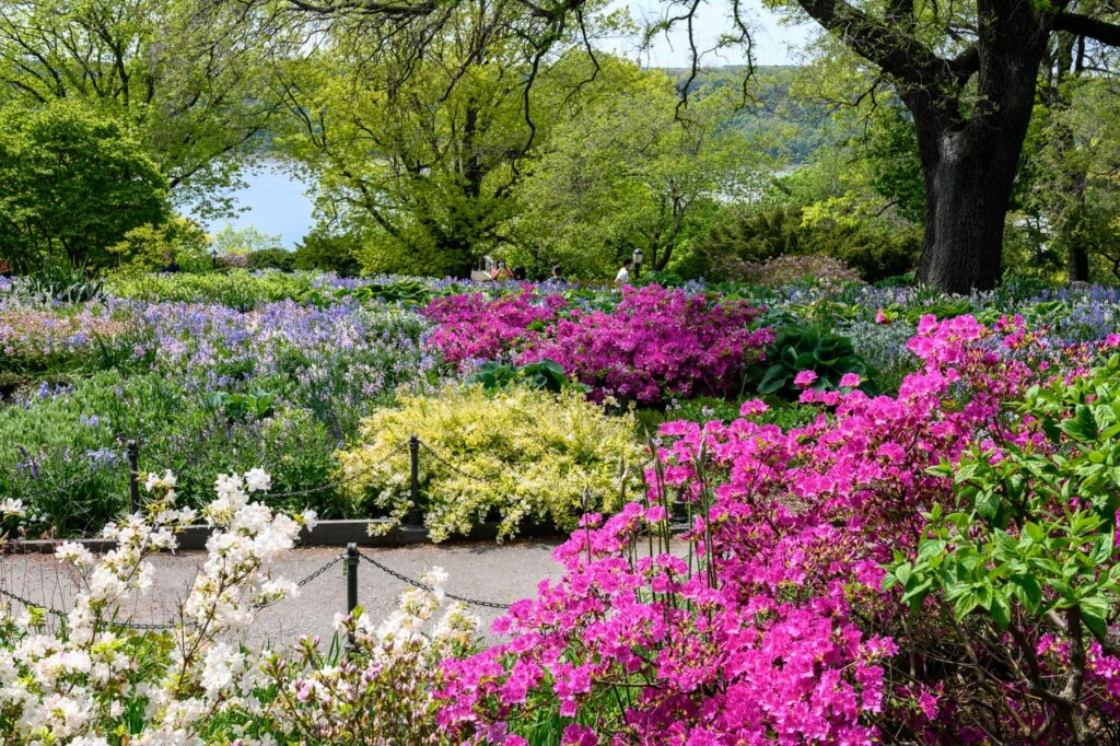 Pink and yellow flowers accentuate spring at Fort Tryon in Upper Manhattan, New York City -- Photo courtesy of Barbara Nelson