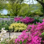 Pink and yellow flowers accentuate spring at Fort Tryon in Upper Manhattan, New York City