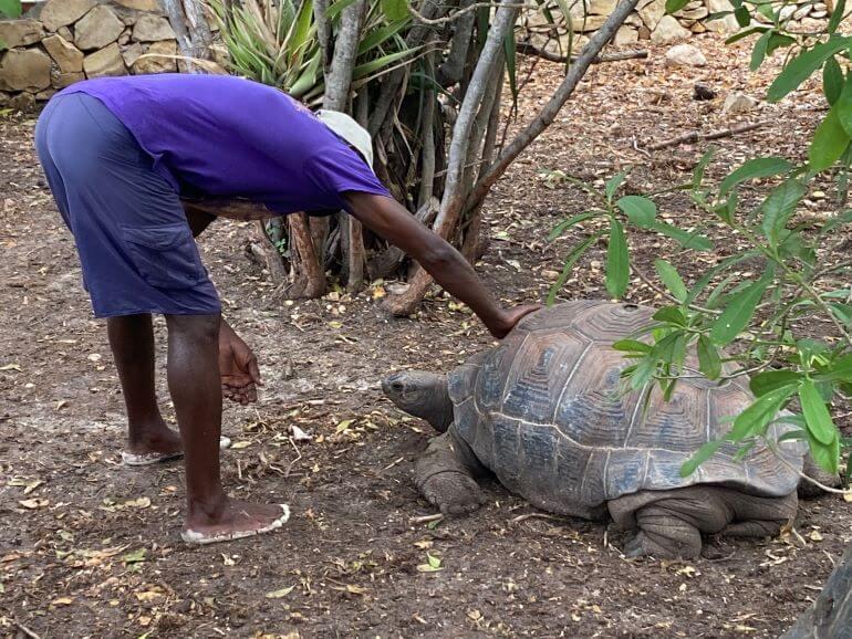 Tortoise on Laviscount Island, Stingray City, Antigua